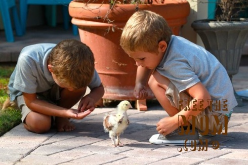 chickens-and-kids