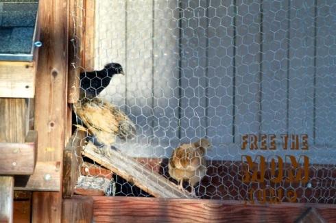chicken-coop-ramp