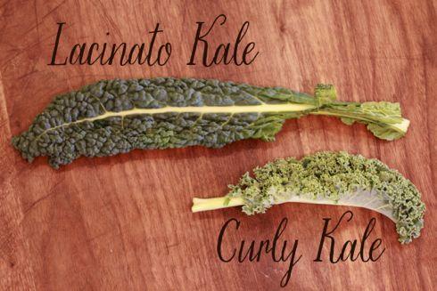 kale-varieties